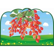 Табличка для детского сада ГРУППА БАРБАРИСКА, фото 1