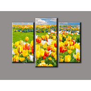 """Трехмодульная картина """"Разнообразие тюльпанов"""", фото 1"""