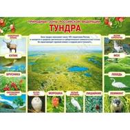 Плакат А2 ПРИРОДНЫЕ ЗОНЫ РФ. ТУНДРА 070.234, фото 1