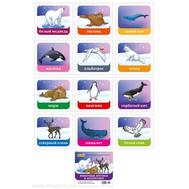 Демонстр.карточки 12шт. ЖИВОТНЫЕ АРКТИКИ И АНТАРКТИКИ 5-14-0242 110*100мм, фото 1