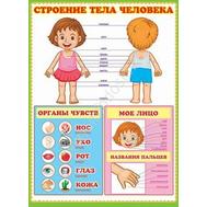 Плакат А2 СТРОЕНИЕ ТЕЛА ЧЕЛОВЕКА 0-02-195А, фото 1