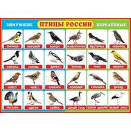 Плакат А2 ПТИЦЫ РОССИИ 0-02-291, фото 1