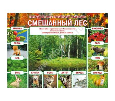 Плакат А2 ПРИРОДНЫЕ ЗОНЫ РФ. СМЕШАННЫЙ ЛЕС 070.235, фото 1