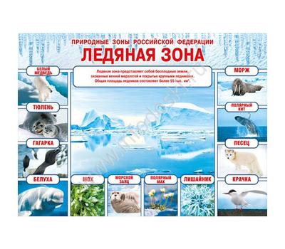 Плакат А2 ПРИРОДНЫЕ ЗОНЫ РФ. ЛЕДЯНАЯ ЗОНА 070.236, фото 1