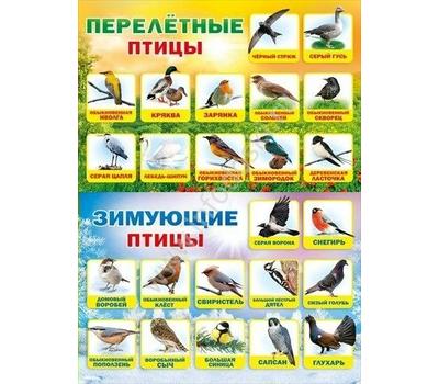 Плакат А2 ПЕРЕЛЕТНЫЕ И ЗИМУЮЩИЕ ПТИЦЫ 070.172, фото 1