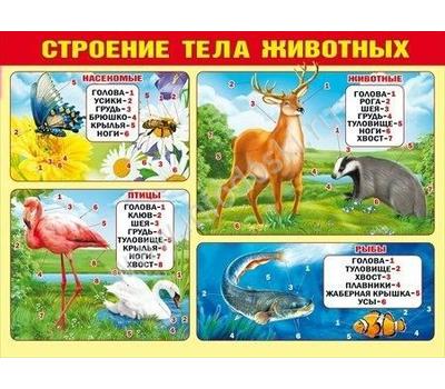 Плакат А2 СТРОЕНИЕ ТЕЛА ЖИВОТНЫХ 070.417, фото 1