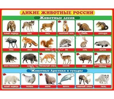 Плакат А2 ДИКИЕ ЖИВОТНЫЕ РОССИИ 0-02-290, фото 1