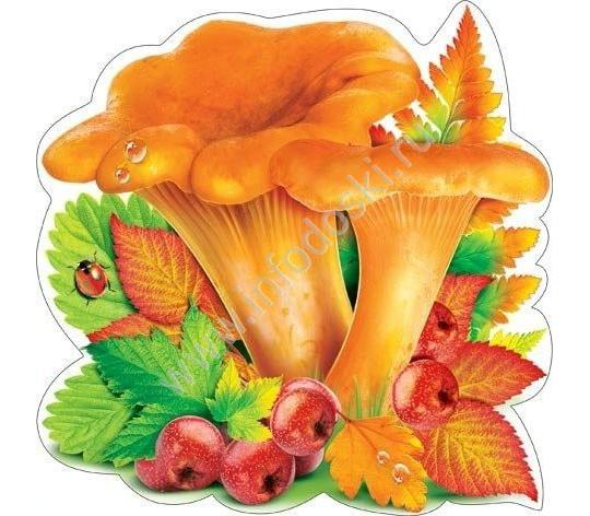 Картинка гриб лисичка анимация, поздравления